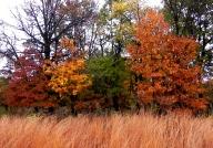 Fall Meadow