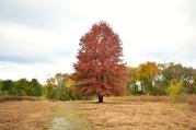 Oak Tree in the Fall