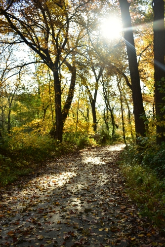 Tacony Creek Park Trail